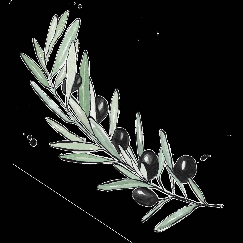 Illustrated olive branch