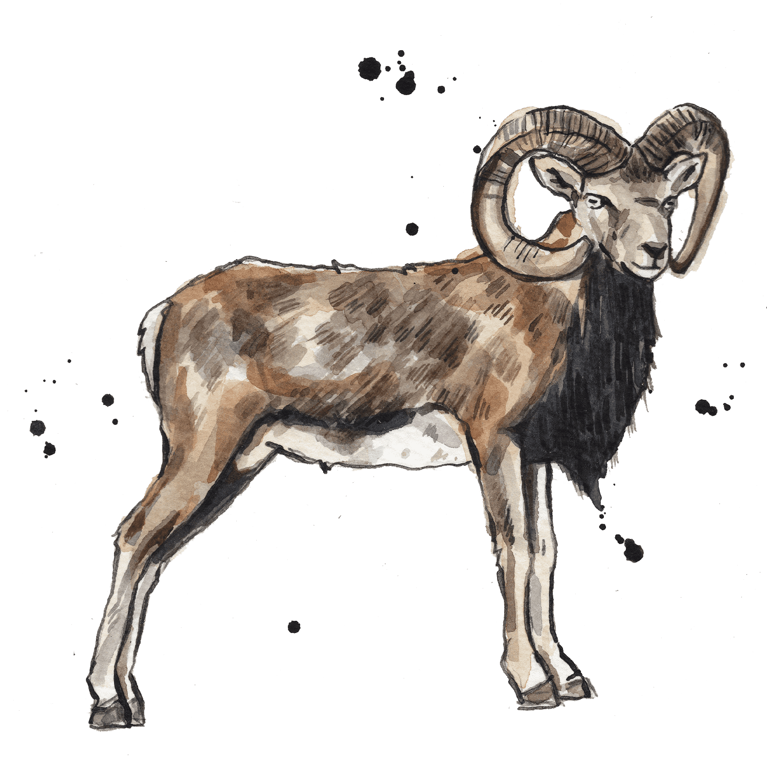 Illustrated ram with horns
