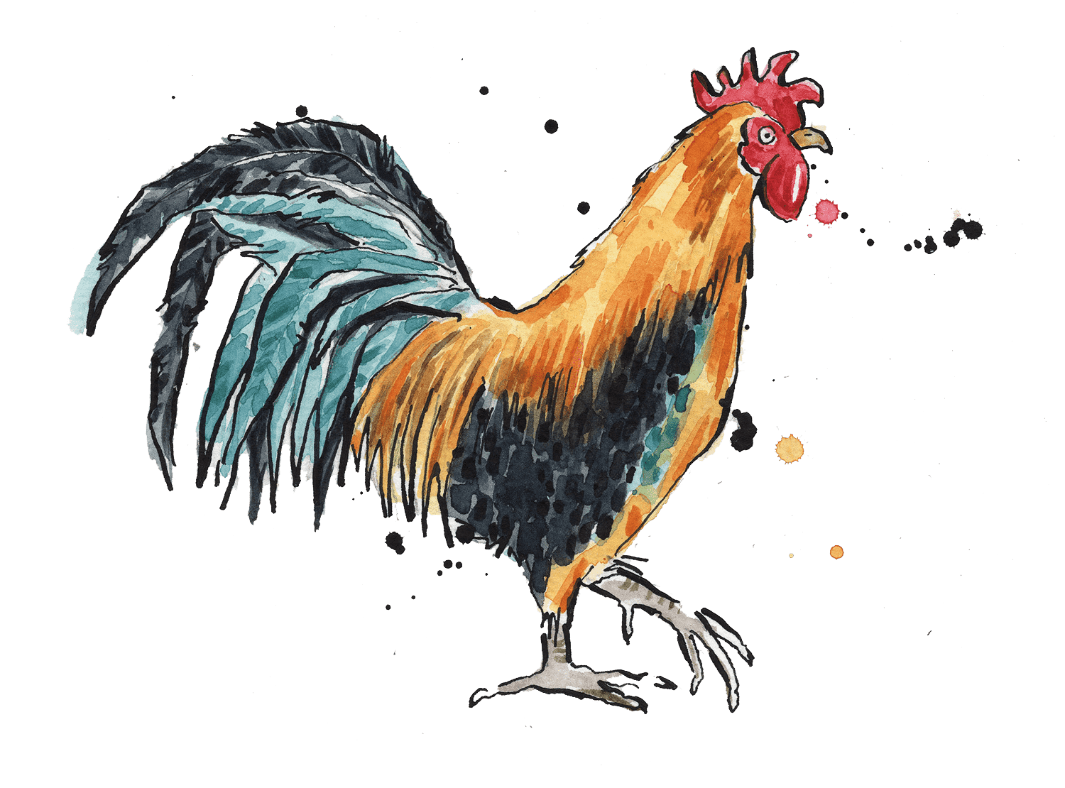 Illustrated colourful rooster