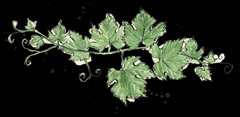 Illustrated vine leaves